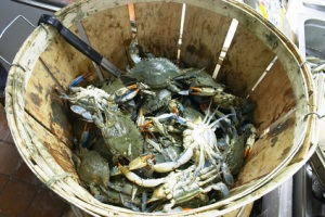 the crabs in a bucket mentality major obstacles to freedom