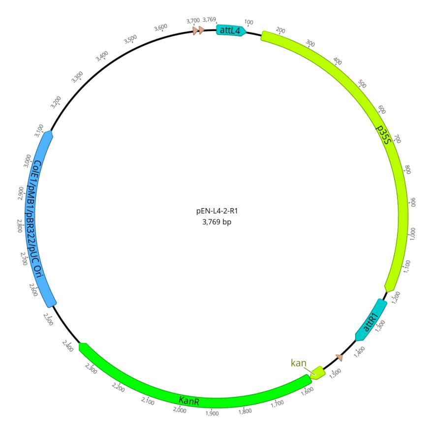 pEN-L4-2-R1   Gateway Vectors