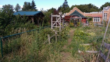 Annual garden, Hood River Middle School