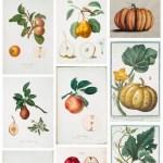 Free Fall Botanical Prints Round-Up