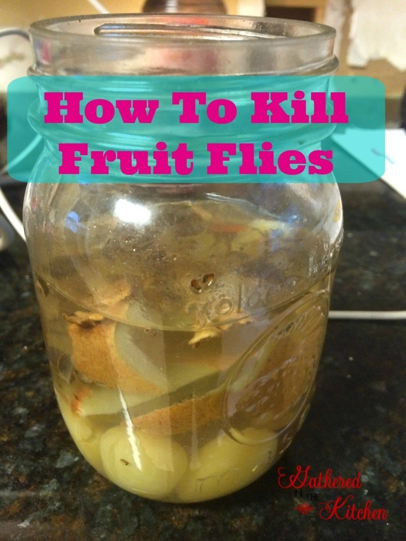 fruit basket for kitchen used how to kill flies - gathered in the