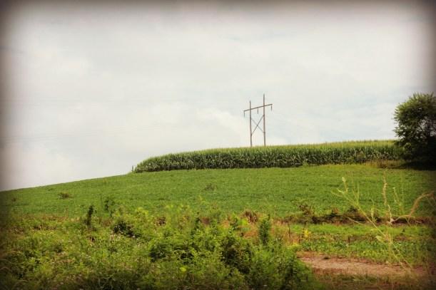 Skyline with cornfields
