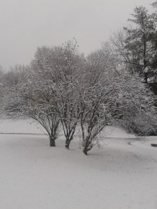 winter pics 2