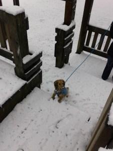 winter pics 5