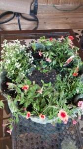 living wreath 5