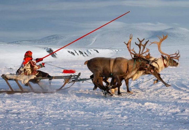 deersleigh