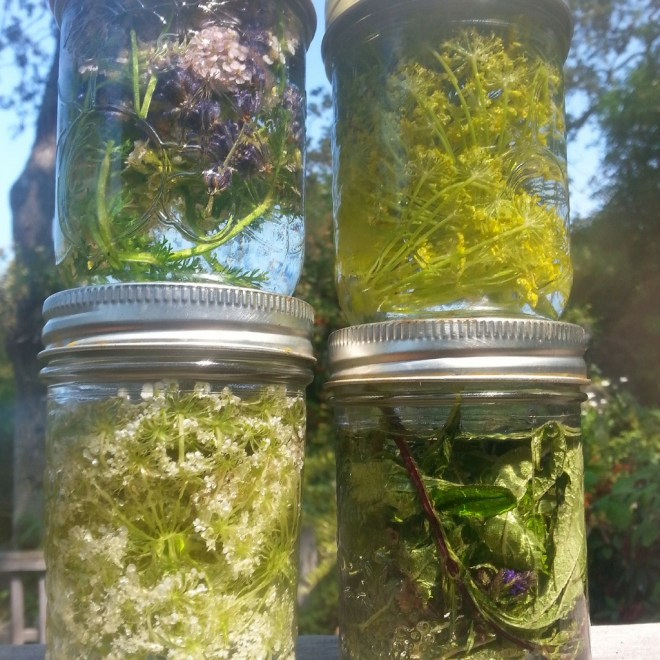 Right top to left: Yarrow and Lavender, Fennel,  Blue Vervain, Queen Anne Lace.