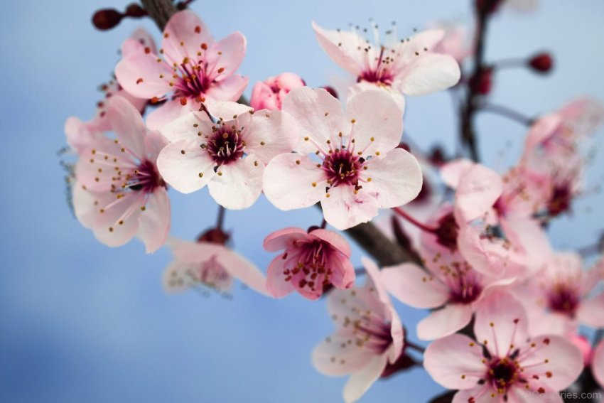Plum-Blossom-Photo-003.jpg