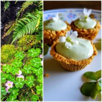 Wood Sorrel Mini-Cream Tarts: Wild Food   Treats