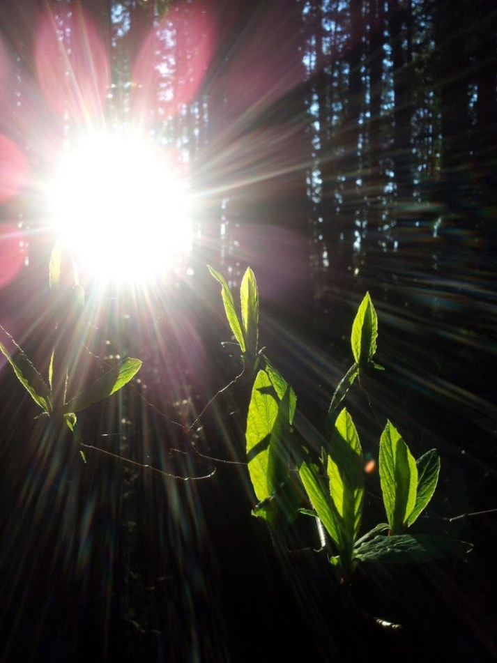 sunsacred