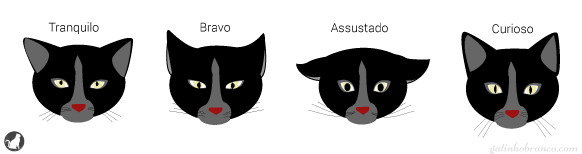expressoes-faciais-gatos