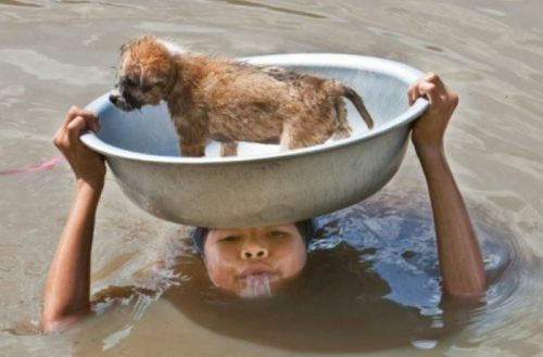 people-doing-amazing-things-for-animals-03168
