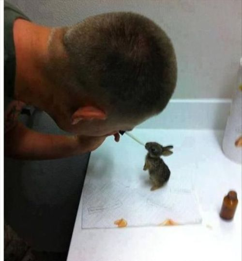 people-doing-amazing-things-for-animals-03169