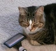 gato escovacao bolas de pelo