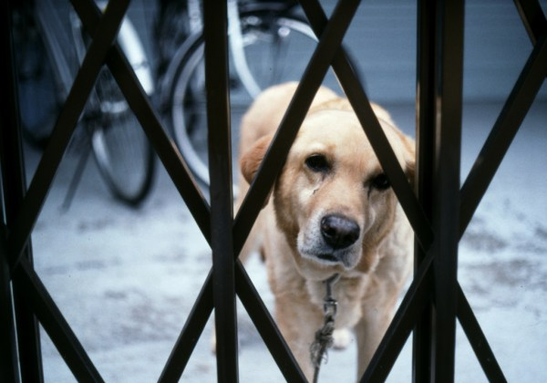 cachorro canil  loucura stress