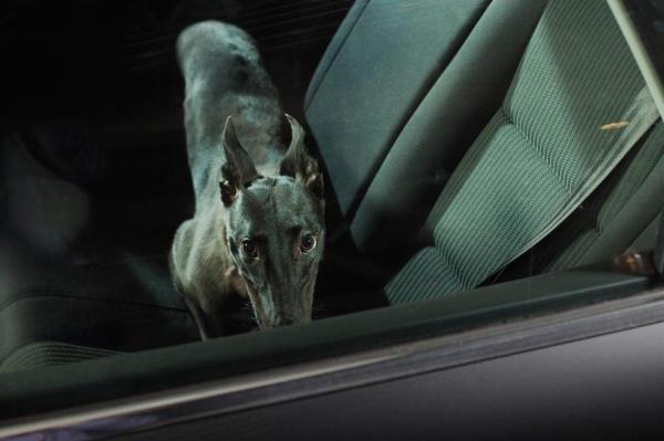 cachorros carros 3