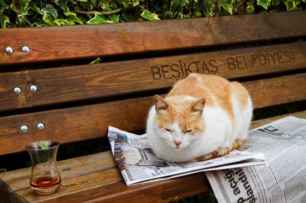 gatos istambul 6