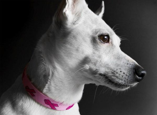 cancer-de-mama-cachorras-gatas