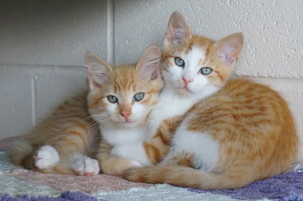 dois gatos melhor um