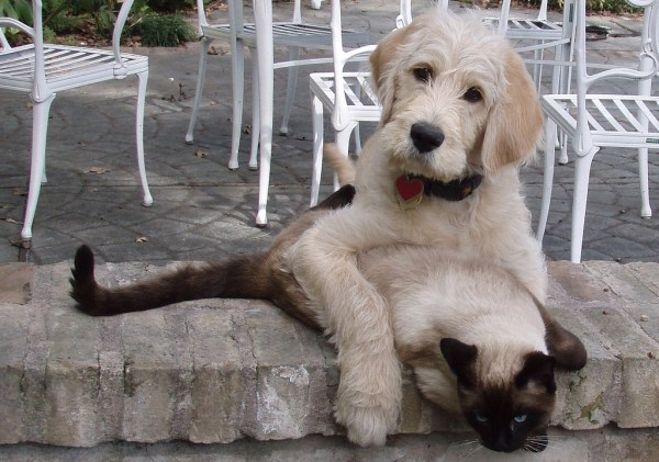 significado palavra pet cachorro gato
