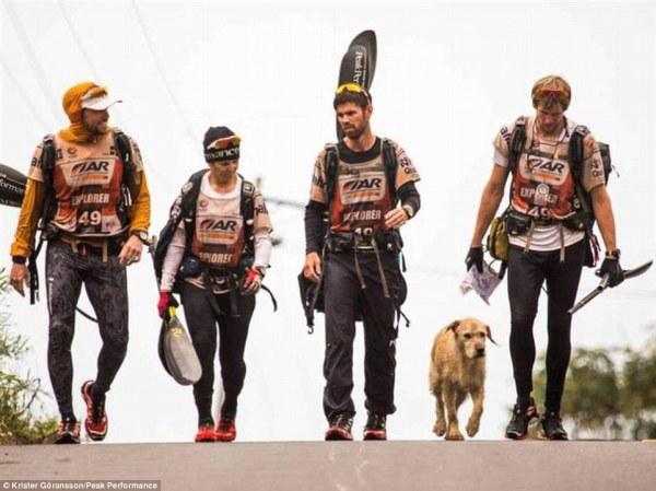 Arthur vira lata corrida maratona 12