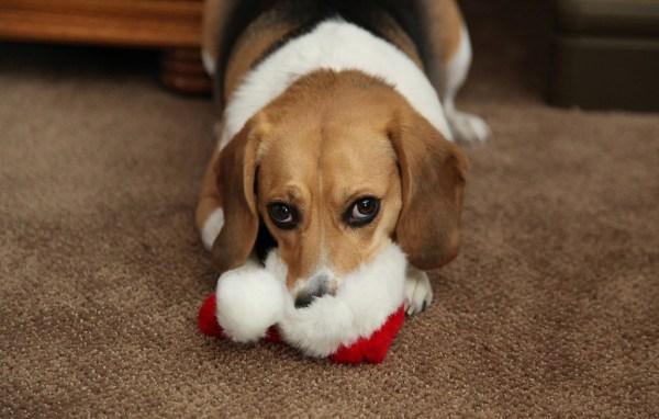 Carta de um cachorrinho para o papai noel natal