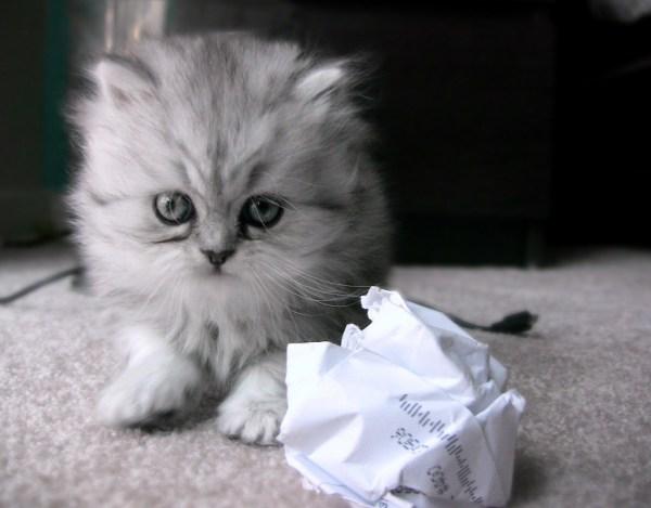 brinquedos que os gatos amam e não custam nada bolinha
