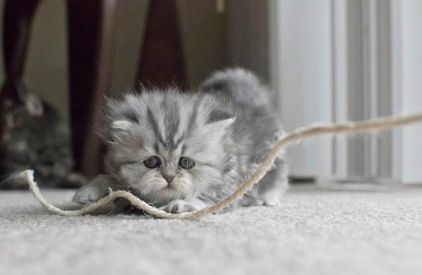 brinquedos que os gatos amam e não custam nada corda sisal