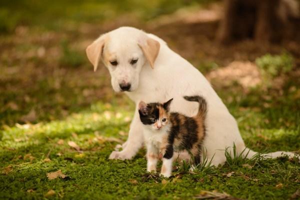 mensagem ano novo quem ama animais