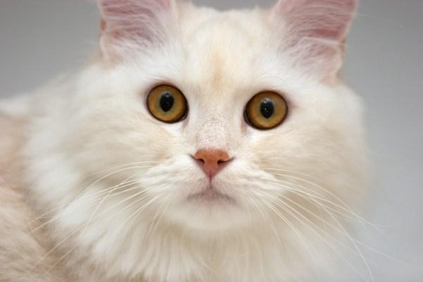 teste para saber se o gato é surdo