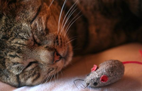 gato combater tedio revezar brinquedos