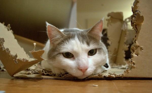 gato-viajar-dicas