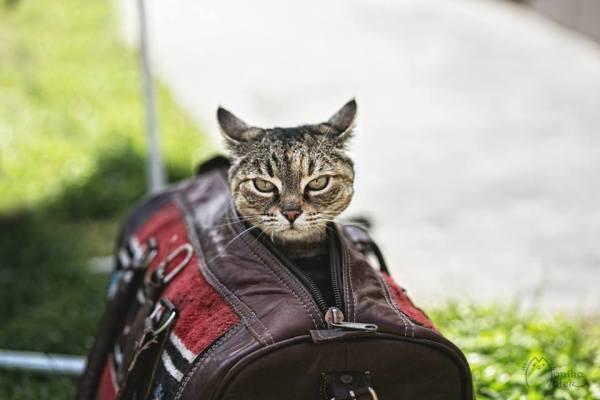 Sou Klocia. Tenho 7 anos. Minhas patas de trás são paralizadas, mas ainda sou um gato.