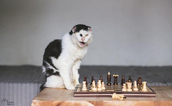 Sou Habibi. Tenho dez anos. Não tenho um olho nem as orelhas, mas ainda sou um gato.