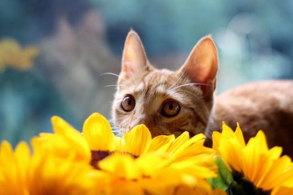 jardim-sensorial-plantas-gatos4