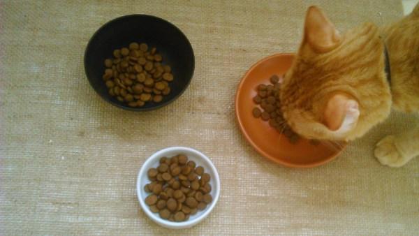 racao-pratinho-gato3