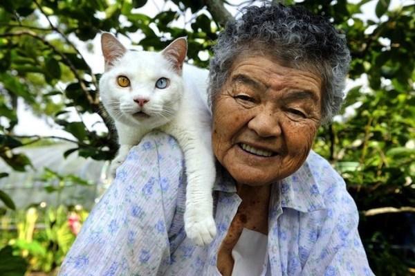 senhora-misao-gatinho-fukumaru-6