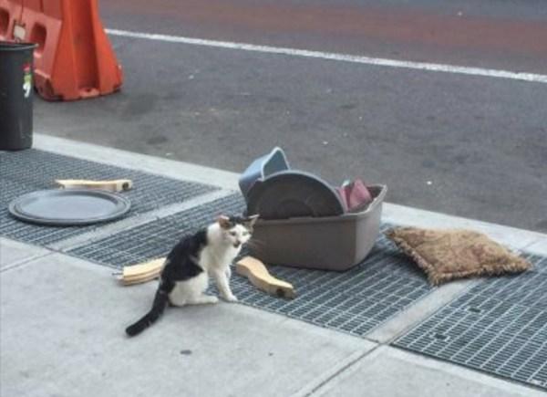 gato-abandonado