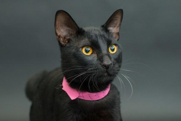 casey elise gatos pretos 4