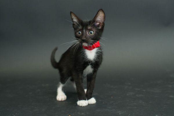 casey elise gatos pretos 9