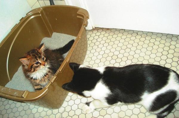 caixa-de-areia-gatos-4