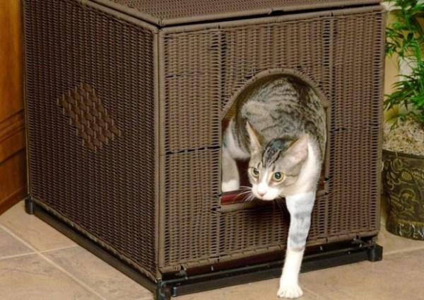 caixa-de-areia-gatos-5