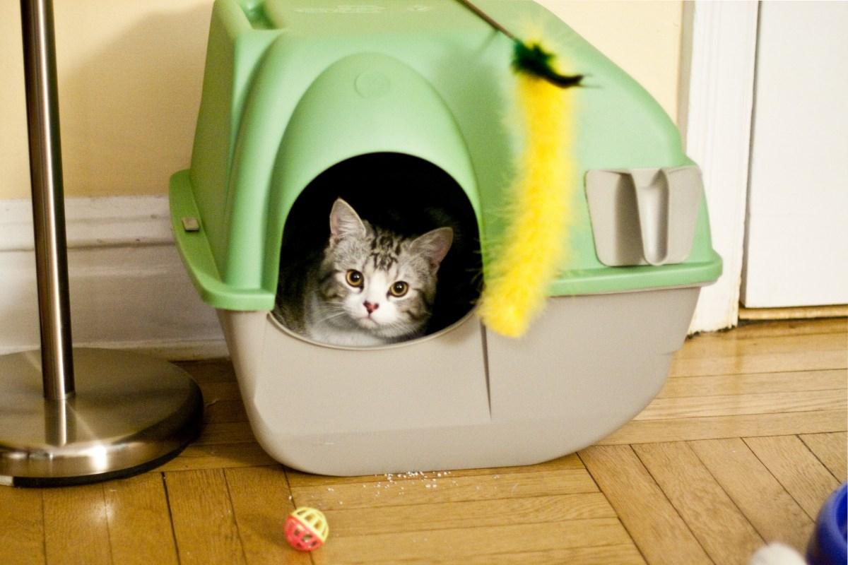 10 coisas que seu gato odeia sobre a caixa de areia