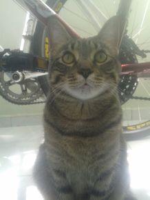historias de adocao gatos wiggle