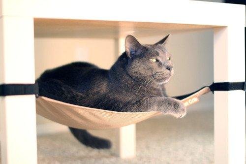 rede-gatos-embaixo-cadeira