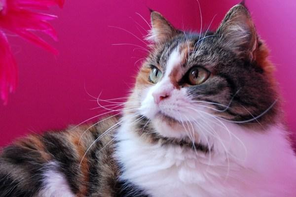 cancer-mama-gatas-outubro-rosa-cachorras-gatos-prevencao