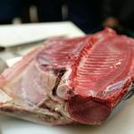 atum-nocivo-gatos-envenenamento