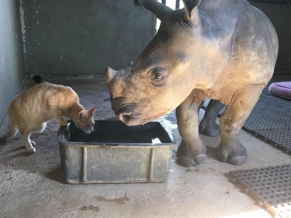 nandi mewie gato rinoceronte amizade
