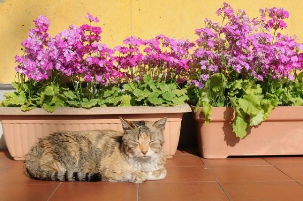 florais animais funciona como escolher como administrar onde comprar 2