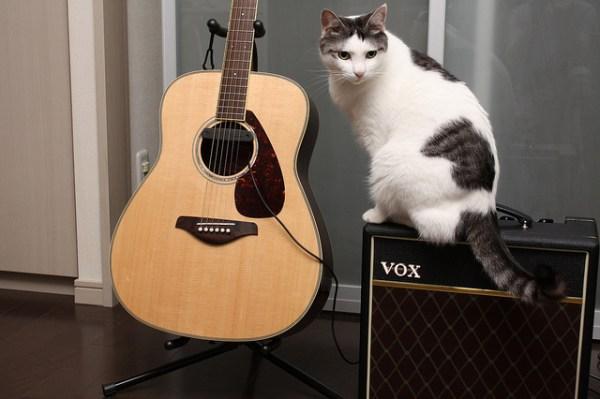 gato musica